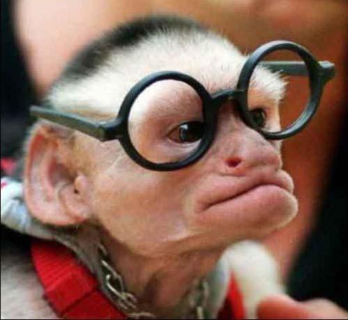 blind-monkey