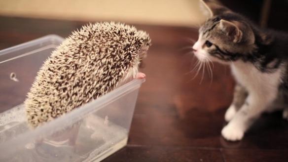 cathedgehog